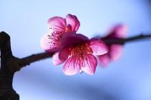 いっぱい春の光を浴びて