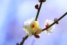 暖かい春の日差し