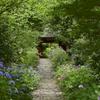 紫陽花の参道