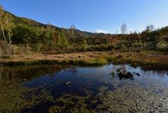 秋の偲ぶの池