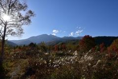 ススキと大カエデのある高原