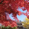上田城の秋
