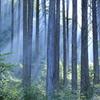 ノルウェーの森
