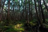 苔の森〜やさしいひかり〜