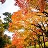 秋色に覆われて