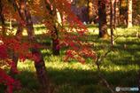 巾着田の紅葉
