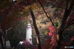 森の中の灯台