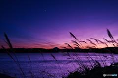 ススキと月と狭山湖と