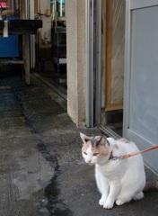 猫背の王女
