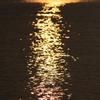 海の黄金色