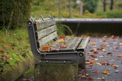 いつものベンチ、秋雨後