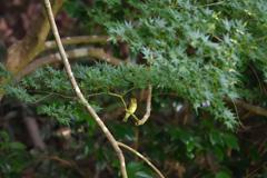 小枝のブランコ
