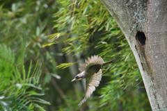 緑啄木鳥の最終日-7
