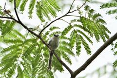 心交わす鳥
