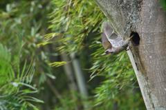 緑啄木鳥の最終日-6