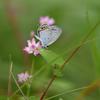 小さな蝶-3
