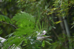 緑啄木鳥の最終日-8
