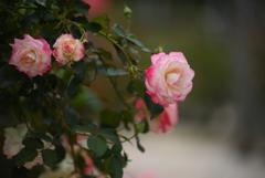 花と語らい