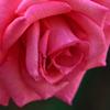 語りかける花