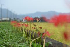 花が続く道