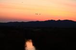 夕景のマガン