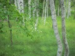 白樺林の白い花