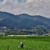 第七百八十七作  「農夫耕す 炎天の芋畑」 愛媛県西条