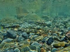 第千五百六十三作  「鮎のはかなさは 深まる秋の 水のつめたさ」  富山県宮崎