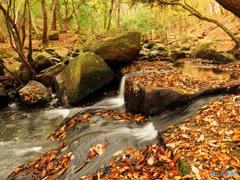 渓流の秋 Ⅱ