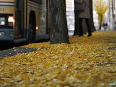 秋と共に去りぬ