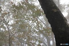 霧中の彩り1
