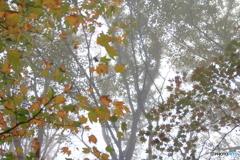 霧中の彩り2