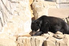 熊のマー君・・人出が多すぎて疲れ気味