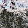 富山城石垣に映える桜色^^