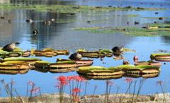 広い池でユッタリ鴨たちの休憩時間