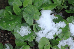 雪が溶け~路傍は緑の命