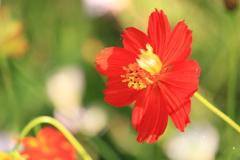 野性的な美しさ・・花言葉にあり