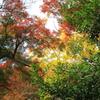 見事な秋の彩