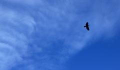 鳥も気持ち良さそう~秋の空