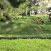 緑地公園の春
