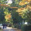 紅葉が眩しいファミリーパーク
