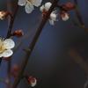 梅が咲いた(^'^)