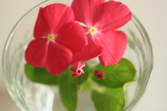 今日の部屋の癒しのひと花 ^^