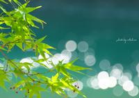NIKON NIKON D7100で撮影した(新緑)の写真(画像)