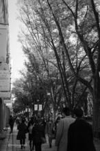 秋の表参道