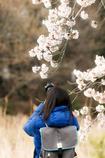 お花見散歩②