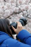 お花見散歩①