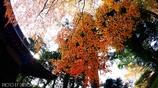 秋なんだなぁ~ <16>