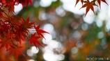 秋に染まる <11>
