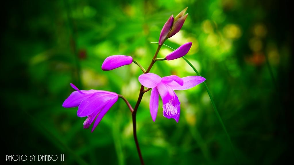 変わらぬ紫 <3>